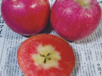 红宝甜红肉苹果